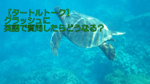 【タートルトーク】クラッシュに英語で質問したらどうなる?